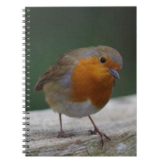 Caderno do pisco de peito vermelho