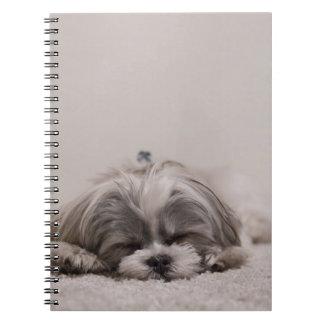 Caderno do sono do tzu de Shih, cão do sono