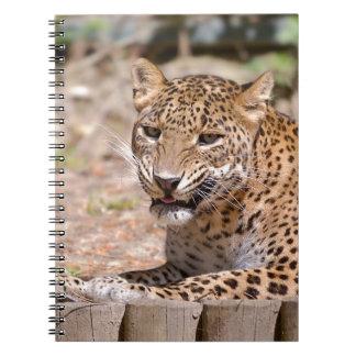 Caderno Encontro do leopardo
