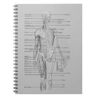 Caderno Espiral Anatomia cinzenta