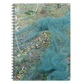 Caderno Espiral Apenas azeitonas escolhidas na rede durante o