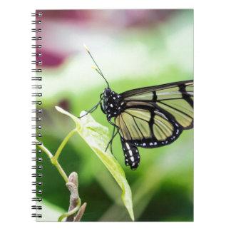 Caderno Espiral Borboleta de vidro da asa