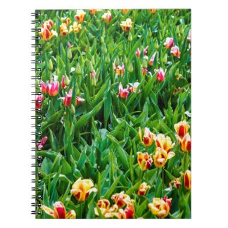 Caderno Espiral Campo com as tulipas cor-de-rosa e amarelas