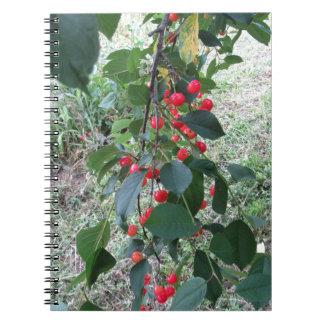 Caderno Espiral Cerejas vermelhas de Montmorency na árvore no