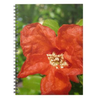 Caderno Espiral Close up da flor vermelha da romã