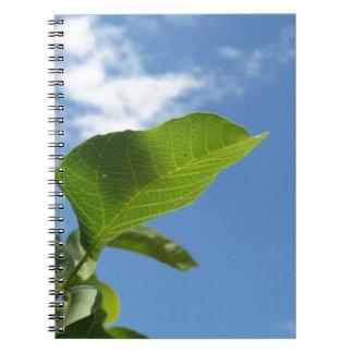 Caderno Espiral Close up da folha da noz iluminado pela luz solar