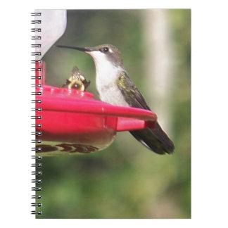 Caderno Espiral Colibri Throated do rubi