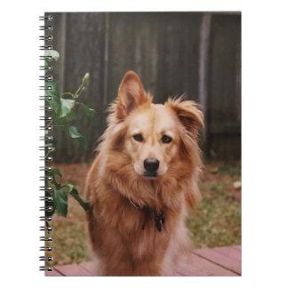 Caderno espiral com foto de um cão
