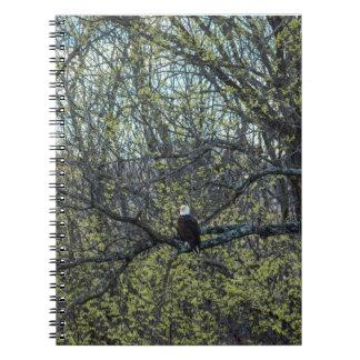 Caderno Espiral Consciência de Eagle