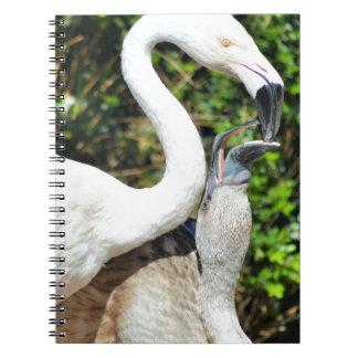 Caderno Espiral Consolide