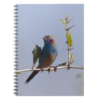 Caderno Espiral Cordonbleu cheeked vermelho (bengalus de