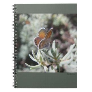 Caderno espiral da borboleta azul ocidental do