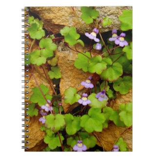 Caderno espiral da foto de Cymbalaria Muralis