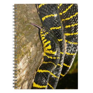 Caderno Espiral Dendrophila de Boiga ou cobra dos manguezais