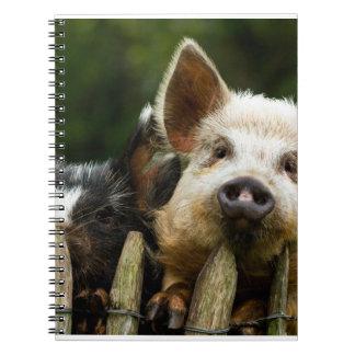Caderno Espiral Dois porcos - fazenda de porco - fazendas da carne