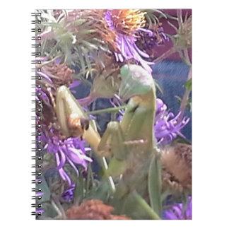 Caderno Espiral Exploração dos besouros do Milkweed em massa