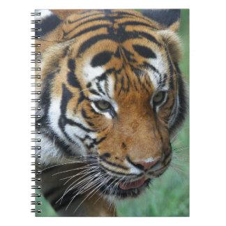 Caderno Espiral Fim-acima do tigre do Malay dos alugueres
