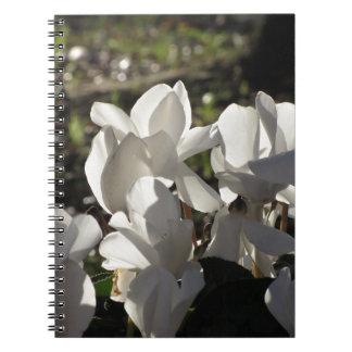 Caderno Espiral Flores brancas do cyclamen de Backlits no fundo
