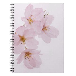Caderno Espiral Flores de cerejeira bonitas do primavera em Tokyo