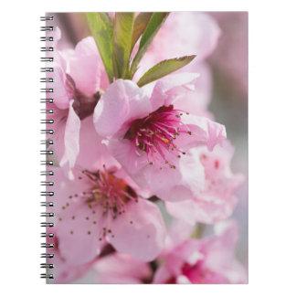 Caderno Espiral Florescência do primavera