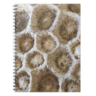 Caderno Espiral Foto coral fossilizada do close up