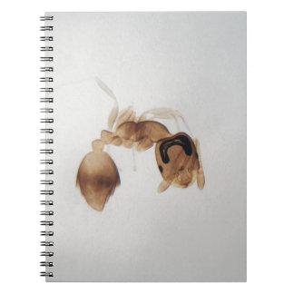 Caderno Espiral Foto do microscópio de uma formiga
