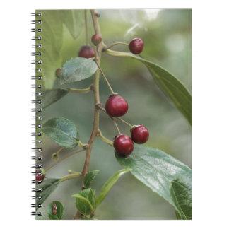 Caderno Espiral Frutas de um espinheiro cerval brilhante da folha
