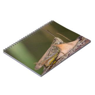 Caderno Espiral Gafanhoto do campo comum