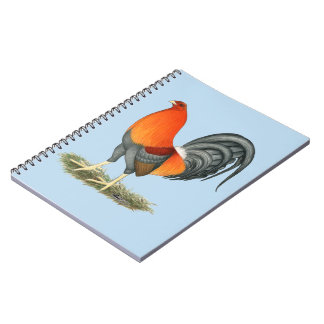 Caderno Espiral Galo do vermelho azul do Gamecock
