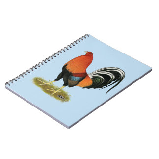 Caderno Espiral Galo Wheaten do Gamecock