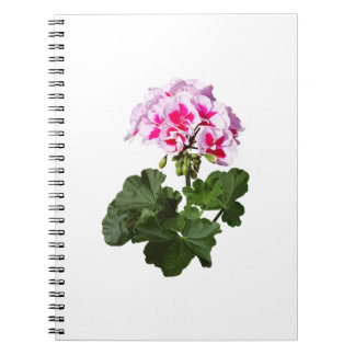 Caderno Espiral Gerânio vermelho e cor-de-rosa