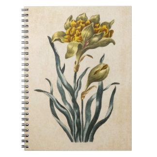 Caderno Espiral Ilustração floral botânica do Daffodil do vintage