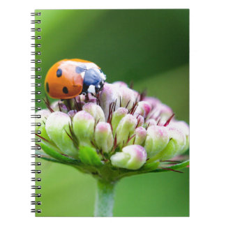 Caderno Espiral joaninha