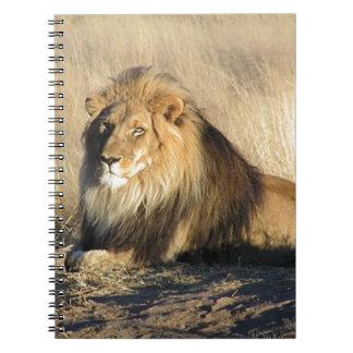 Caderno Espiral Leão que lounging em Nambia