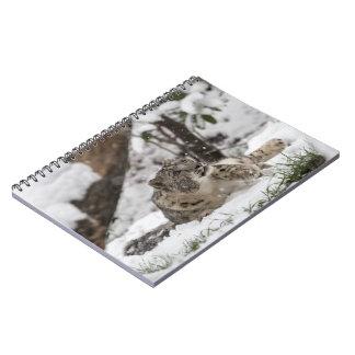 Caderno Espiral Leopardo de neve curioso na neve