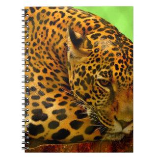 Caderno Espiral Leopardo no registro de Brown