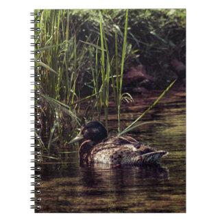 Caderno Espiral Na borda da lagoa