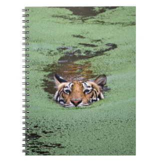 Caderno Espiral Natação do tigre de Bengal