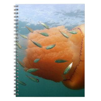Caderno Espiral Natações das medusa do tambor com cavala