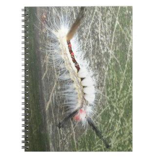 Caderno Espiral O que é ele inseto
