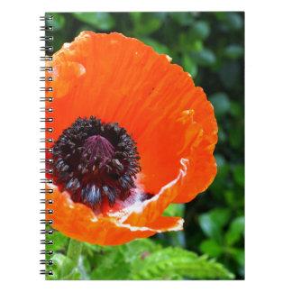 Caderno Espiral Papoila vermelha