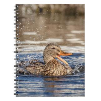 Caderno Espiral Pato do pato selvagem no parque tragando