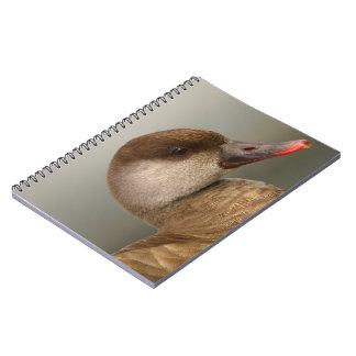Caderno Espiral Pato fêmea do larro, rufina do netta, retrato