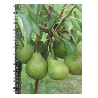 Caderno Espiral Peras verdes que penduram em uma árvore de pera