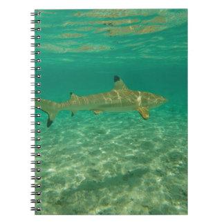 Caderno Espiral Shark in bora bora