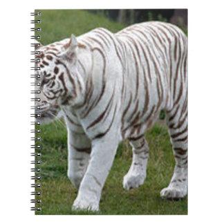 Caderno Espiral Tigre branco