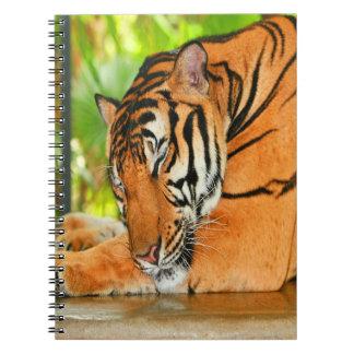 Caderno Espiral Tigre do sono