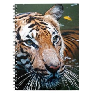 Caderno Espiral Tigre dos alugueres na água