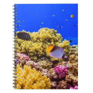 Caderno Espiral Um recife de corais no Mar Vermelho perto de