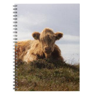 Caderno Espiral Vaca de Luing na ilha de Islay, Scotland